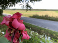 Une belle vue sur les champs