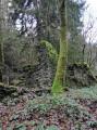 Une ruine à la Dauphinée
