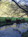 Vaches Highland 2