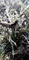 Végétation de la forêt de Bélouve