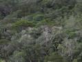Vue sur la forêt primaire