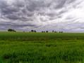 Vue sur les champs